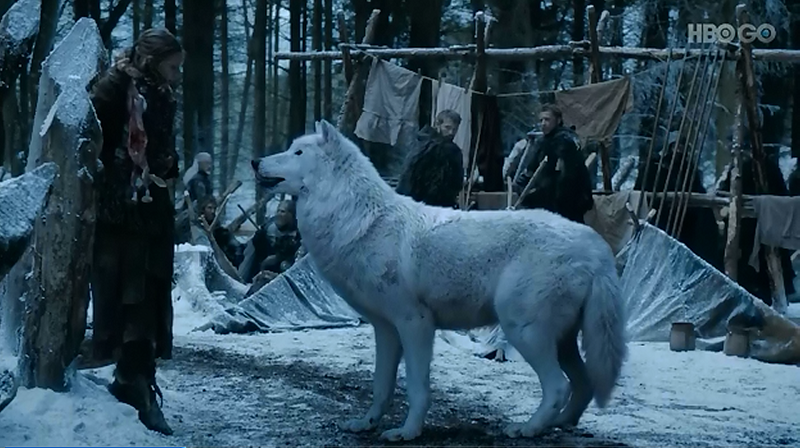 Jon Snow's direwolf, Ghost